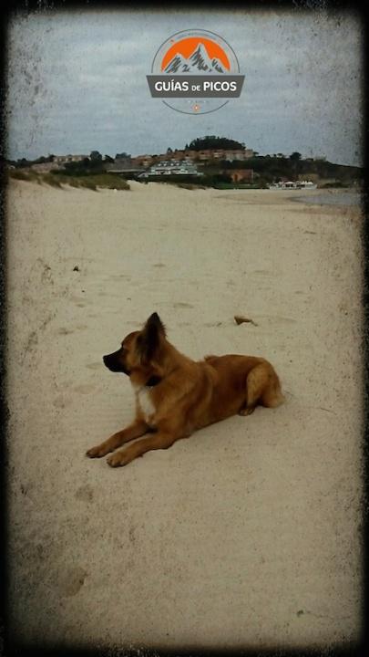 Rutas con perro. Playa de San Vicente de la Barquera (Cantabria)