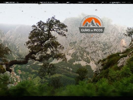 Desfiladero de La Hermida desde entorno Cueva Cioña