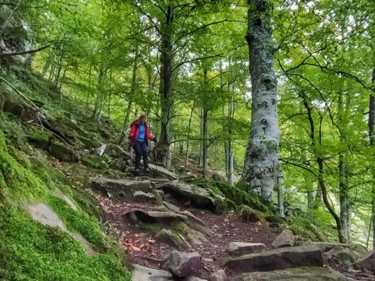 trekking-autumn-picos-europa-bosque-ruta-guia-mampodre