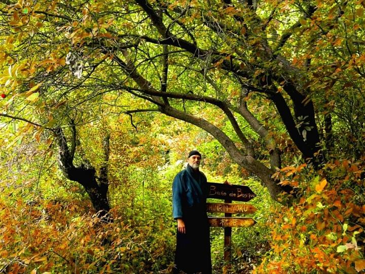 Baños de bosque Shinrin Yoku